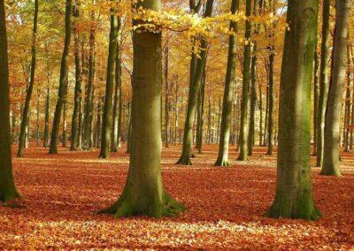 Herfst bij de Boschkamp